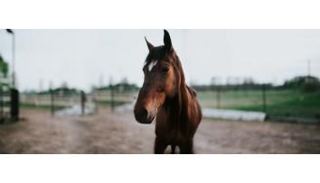 Nutztiere und Pferde