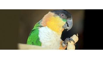 Exotische Tiere und Vögel
